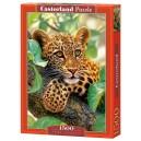 Пазл - Леопард на дереве (Castorland) 1500 эл.