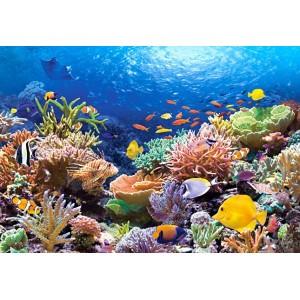 Пазл - Риби коралових рифів (Castorland) 1000 ел.